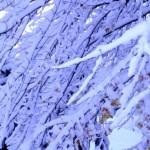 米中西部に記録的な大寒波が発生!地球温暖化はどうなったの?